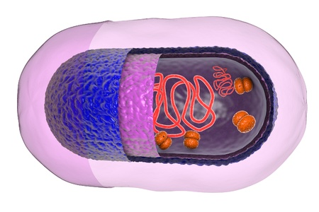 Structure of bacterial cell isolated on white background, 3D illustration