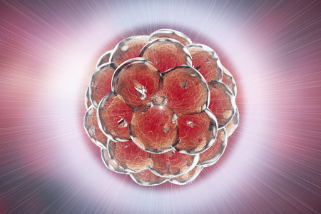 teratogenic: Destruction of a human embryo. 3D illustration which can be used to illustrate teratogenic effect of drugs, viruses, microbes, abortive medicines, nanoparticles