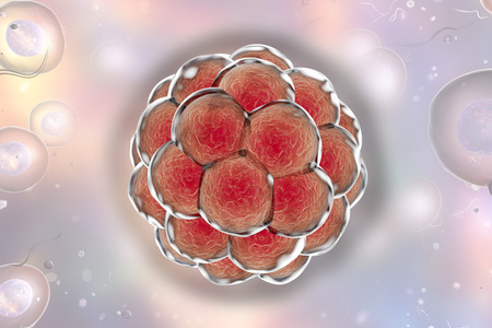 embryogenesis: Human embryo on background with cells. 3D illustration