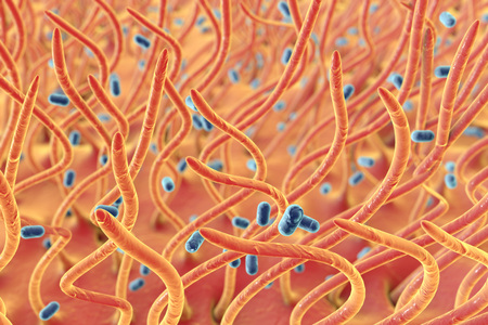 Bordetella pertussis bacteria in respiratory tract, 3D illustration. Bacteria which cause whooping cough. Illustration shows cilia of respiratory tract and bacteria