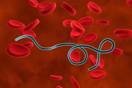 lyme: 3D illustration of Borrelia bacteria in blood with red blood cells. Bacteria which cause relapsing fever and Lyme disease Stock Photo