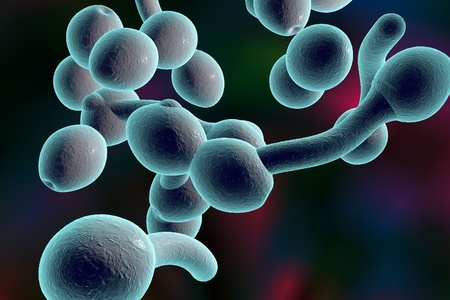 candida: 3D illustration of fungi Candida albicans which cause candidiasis, thrush, on colorful background. Pathological fungus or yeast