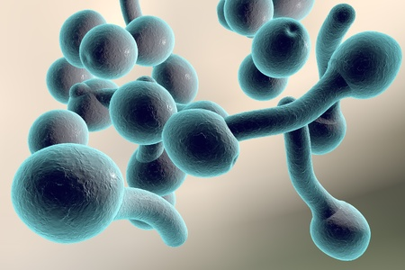 3D illustration of fungi Candida albicans which cause candidiasis, thrush, on colorful background. Pathological fungus or yeast Imagens