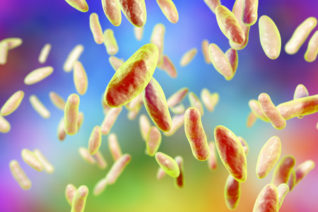 Brucella bacteria, 3D illustration. Gram-negative pleomorphic bacteria which cause brucellosis in cattle and humans and are transmitted to man by direct contact with ill animal or by contaminated milk