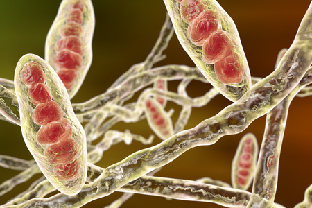 fungal disease: Fungus Trichophyton mentagrophytes. Macroconidia multi-celled bodies and hyphae filamentous structures , 3D illustration. Causes athletes foot Tinea pedis and scalp ringworm Tinea capitus