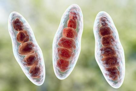 fungal disease: Macroconidia multi-celled bodies of fungus Trichophyton mentagrophytes, 3D illustration. This microscopic fungus causes athletes foot Tinea pedis and scalp ringworm Tinea capitus