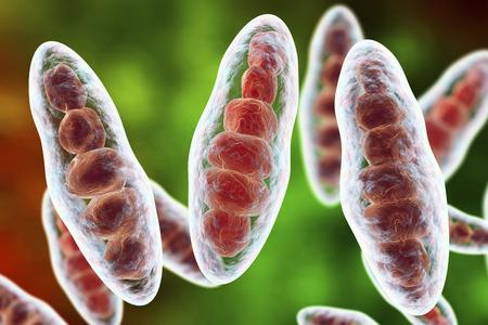 fungus: Macroconidia multi-celled bodies of fungus Trichophyton mentagrophytes, 3D illustration. This microscopic fungus causes athletes foot Tinea pedis and scalp ringworm Tinea capitus
