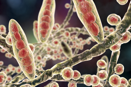 infectious: Fungus Trichophyton mentagrophytes. 3D illustration showing macroconidia multi-celled bodies with spores , micro-conidia single-celled bodies with spores and hyphae filamentous structures Stock Photo