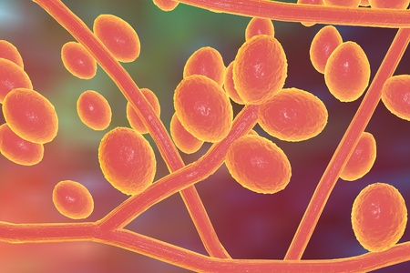 infectious: 3D illustration of fungi Trichophyton rubrum which cause tinea, athletes foot, ringworm, jock itch and similar infections of the skin, nail, beard and scalp on colorful background