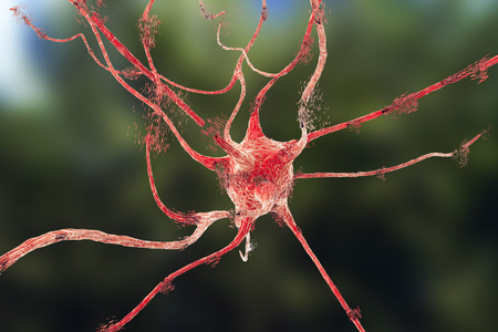 wścieklizna: Apoptosis of neuron which is observed in different diseases, such as viral encephalitits, neurodegenerative diseases, psychiatric disorders, African trypanosomiasis, rabies and other. 3D illustration