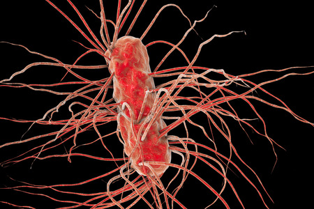 flagella: Escherichia coli bacterium, 3D illustration. Gram-negative bacterium with peritrichous flagella which is part of normal intestinal microflora and also causes enteric and other infections