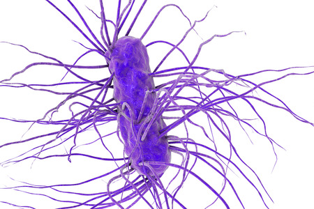 gastroenteritis: Escherichia coli bacterium isolated on white background, 3D illustration. Gram-negative bacterium with flagella which is part of normal enteric microflora and also causes enteric infections Stock Photo