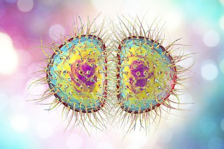 bacterial meningitis: Bacteria Neisseria gonorrhoeae or Neisseria meningitidis, gonococcus and meningococcus, 3D illustration. Bacteria which cause gonorrhoeae. Bacteria which cause meningitis