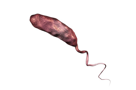 vibrio: Vibrio cholerae bacterium isolated on white background, 3D illustration. Bacterium which causes cholera Stock Photo