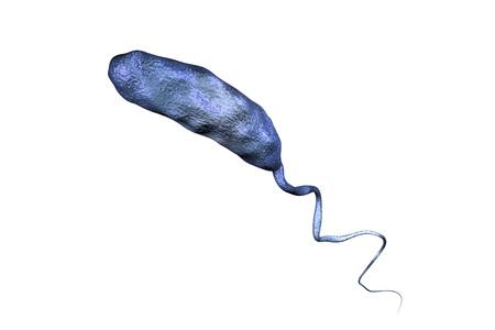 colera: bacteria Vibrio cholerae aislado en el fondo blanco, ilustración 3D. Bacteria que causa el cólera