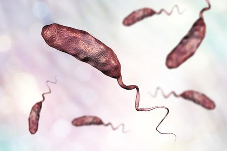 Vibrio cholerae bacterium, 3D illustration. Bacterium which causes cholera