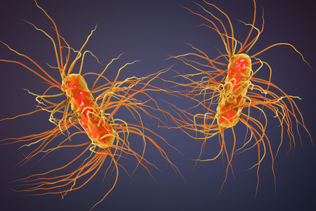 gastroenteritis: Escherichia coli bacterium, 3D illustration. Gram-negative bacterium with peritrichous flagella which is part of normal intestinal microflora and also causes enteric and other infections
