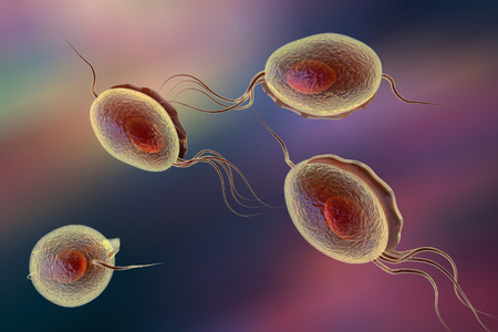 Trichomonas vaginalis, a sexually transmitted protozoan which causes trichomoniasis, 3D illustration Stock Photo