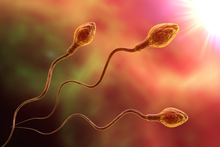 Spermatozoans moving to fertilize egg cell, 3d illustration