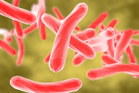 respiratory infection: Bacteria which cause tuberculosis Mycobacterium tuberculosis, 3D illustration