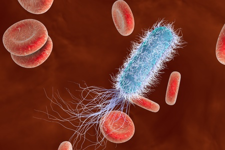 Bacterium Pseudomonas aeruginosa in blood, antibiotic-resistant nosocomial bacterium, 3D illustration. Illustration shows polar location of flagella and presence of pili on the bacterial surface Stock Photo