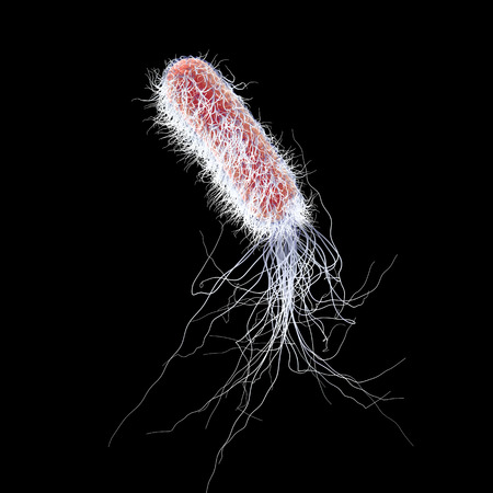 Bacterium Pseudomonas aeruginosa isolated on black background, antibiotic-resistant nosocomial bacterium, 3D illustration. Illustration shows polar location of flagella and presence of pili on the bacterial surface