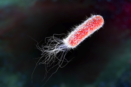 Bacterium Pseudomonas aeruginosa on colorful background, antibiotic-resistant nosocomial bacterium, 3D illustration. Illustration shows polar location of flagella and presence of pili on the bacterial surface