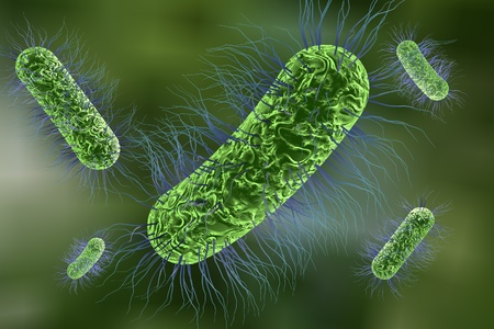 Escherichia coli bacterium, 3D illustration. Gram-negative bacterium with peritrichous flagella which is part of normal intestinal microflora and also causes enteric and other infections