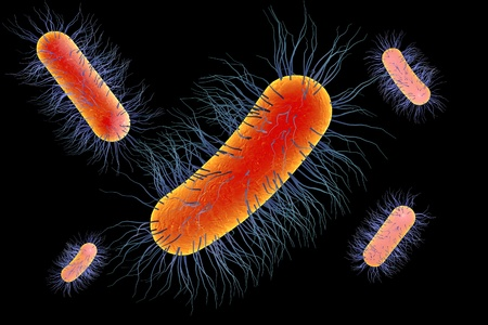 coli: Escherichia coli bacterium, 3D illustration. Gram-negative bacterium with peritrichous flagella which is part of normal intestinal microflora and also causes enteric and other infections