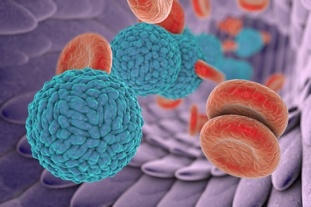 Dengue virus in blood. A virus which causes yellow fever and is transmitted by mosquitoes, 3D illustration