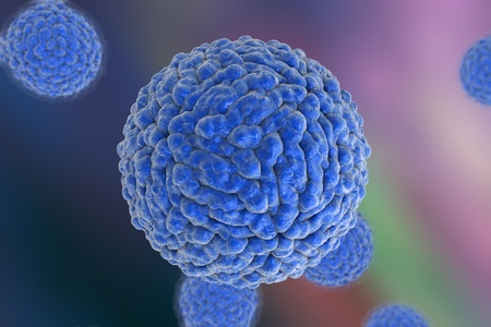 virology: Dengue virus which causes yellow fever and is transmitted by mosquito, 3D illustration. A model is built using data of viral macromolecular structure furnished by Protein Data Bank, PDB 3J 27 Stock Photo
