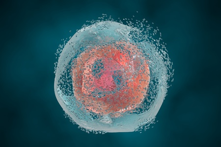 microbes: Cell lysis. Destruction of a cell. 3D illustration that can be used to illustrate effect of drugs, microbes, nanoparticles, toxic substances or apoptosis