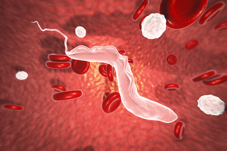 protozoa: Sleeping sickness parasites, 3D illustration. Trypanosoma parasites transmitted by tse-tse fly and causing African sleeping sickness