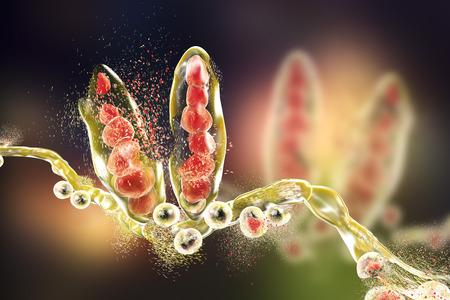 fungus: Destruction of fungus Trichophyton mentagrophytes which causes athletes foot Tinea pedis and scalp ringworm Tinea capitus. 3D illustration. Concept for antifungal treatment
