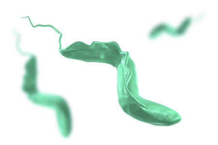 diseased: Trypanosoma brucei which is transmitted by tse-tse fly and causes African sleeping sickness, isolated on white background, 3D illustration