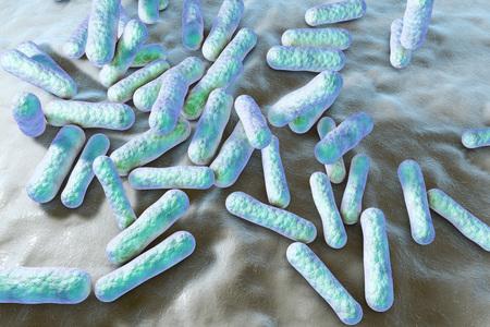 Propionibacterium acnes, illustration 3D. Les bactéries qui se trouvent dans les follicules pileux et les pores de la peau dans le cadre de la flore normale, mais peut aussi causer de l'acné dans le cas d'une surproduction de sébum Banque d'images