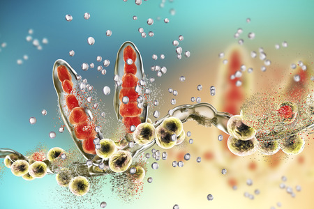 fungal: Destruction of fungus Trichophyton by silver nanoparticles, a fungus which causes athletes foot Tinea pedis and scalp ringworm Tinea capitus. 3D illustration. Concept for antifungal treatment Stock Photo