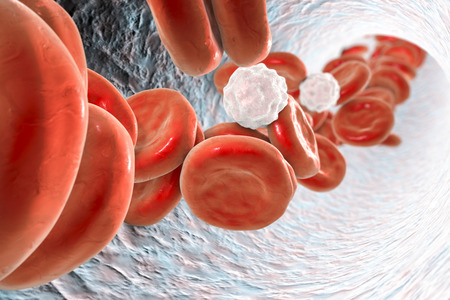 leukocyte: Inside blood vessel with red blood cells and white blood cells. 3D illustration