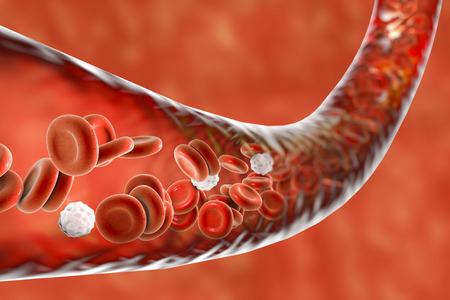 leukocyte: Blood vessel with flowing blood cells, 3D illustration