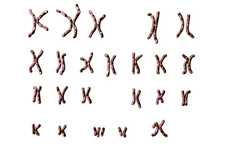 Down-syndrome karyotype, female unlabeled, isolated on white background. Trisomy 21. 3D illustration