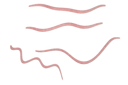 Helminths nematodes Enterobius Threadworm which cause enterobiasis, isolated on white background, 3D illustration