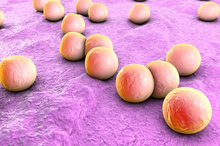 mrsa: Bacteria Staphylococcus aureus on the surface of skin or mucous membrane, 3D illustration