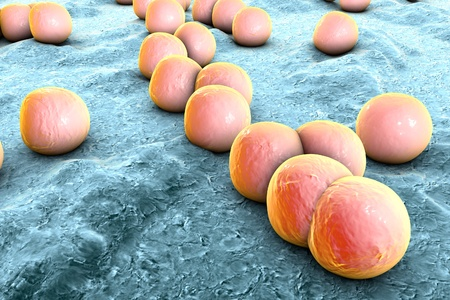 Bacteria Staphylococcus aureus on the surface of skin or mucous membrane, 3D illustration