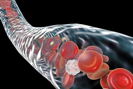 vascular: Blood vessel with flowing blood cells, 3D illustration