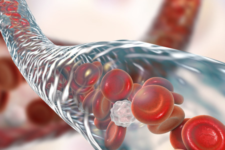 leukocyte: Blood vessel with flowing blood cells, 3D illustration