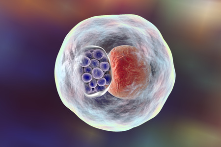 Chlamydia inclusion in human cell. 3D illustration showing group of chlamydial elementary bodies near the nucleus of a cell Stock Photo