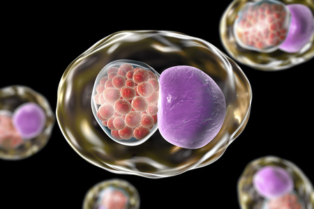 pneumoniae: Chlamydia inclusion in human cell. 3D illustration showing group of chlamydial elementary bodies near the nucleus of a cell Stock Photo