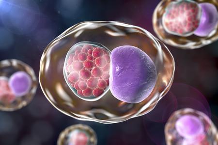 Chlamydia opname in menselijke cel. 3D illustratie toont een groep chlamydial elementaire lichamen in de buurt van de kern van een cel Stockfoto