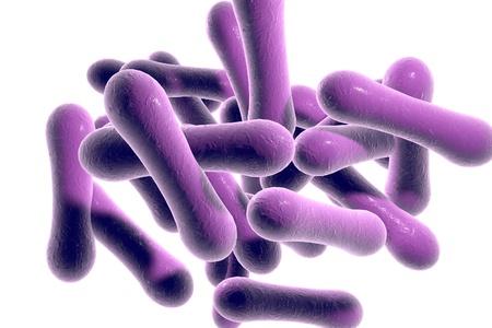 Bacteriën die difterie Corynebacterium diphtheriae op een witte achtergrond te veroorzaken, 3D illustratie Stockfoto