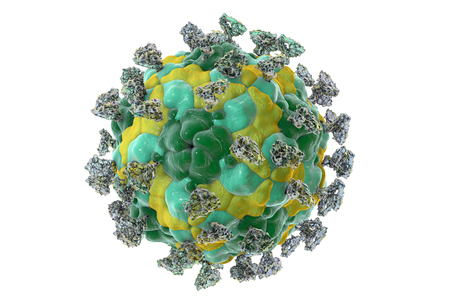 contagious: Enterovirus with attached integrin molecules, 3D illustration Stock Photo